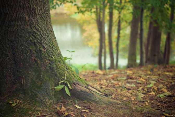 autumn-forest-672